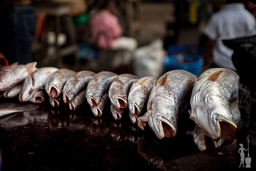 Fish markets in Lagos